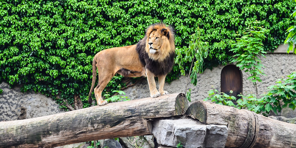 Зоопарк Артис в Амстердаме насчитывает более 6000 видов животных