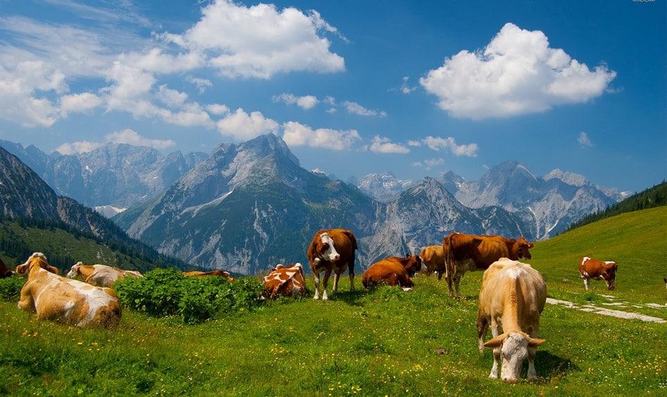 голландские сыры из коровьего молока